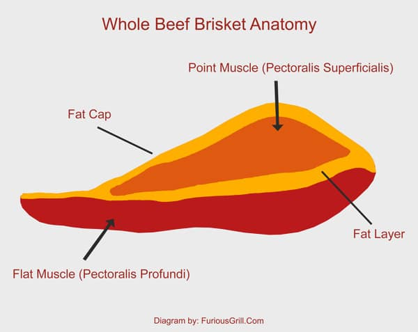 Brisket-Muscles-Anatomy