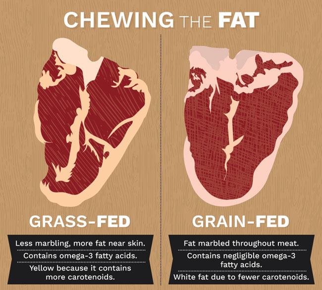 Chewing-Fat-Beef-Differences-Graphic