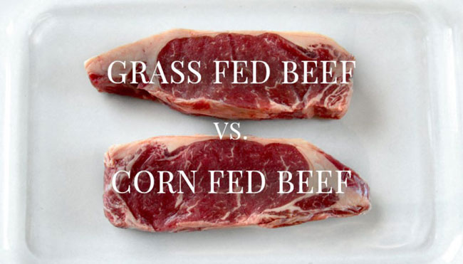 Grain-Fed-Beef-vs-Grass-Fed-Beef